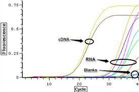 Removal of genomic DNA contamination during total RNA extraction