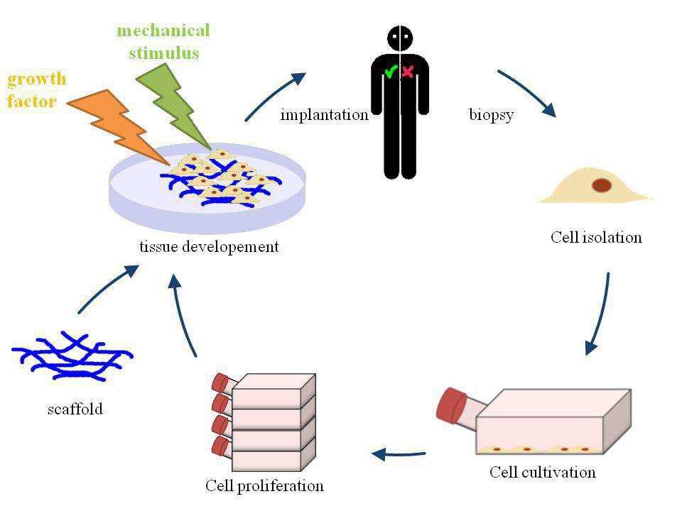 تجهیزات اولیه و انواع کشت سلول
