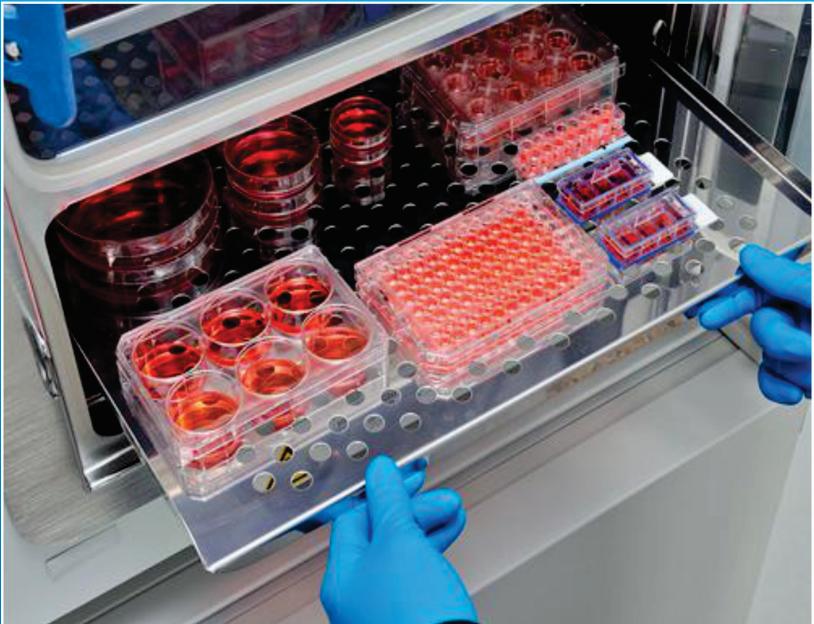 کشت سلول - فلوسیتومتری - داربست بافتی - اسپکتروفلوریمتری