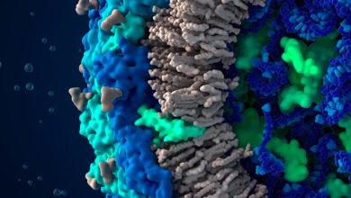 اجزا و نواحی تشکیل دهنده وکتورها یا پلاسمیدهای بیانی Promoter & Replicon Region