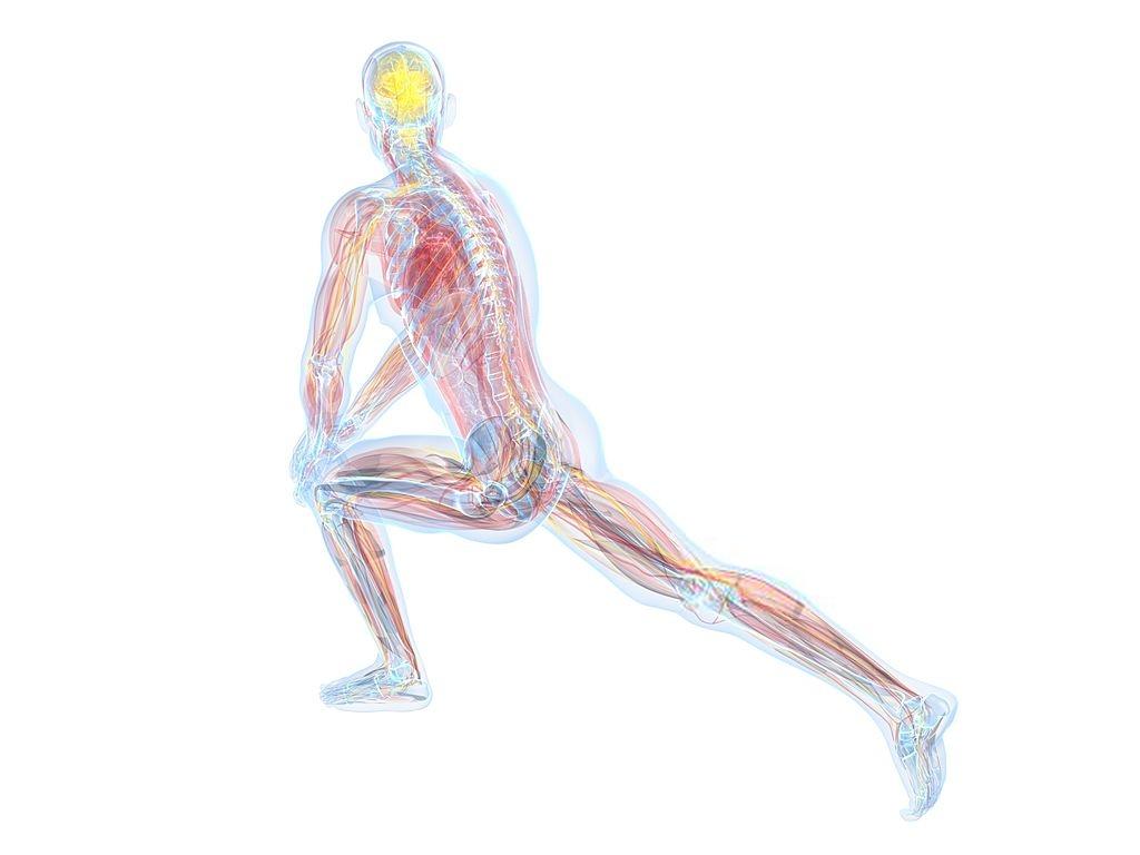 فیزیولوژی ورزشی و علوم ورزشی