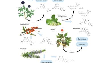 مواد موثره گیاهان دارويي
