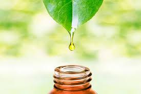استخراج عصاره - استخراج اسانس - ماده موثره - گیاهان دارویی - اسانس گیری - عصاره گیری - اسانس زرد چوبه