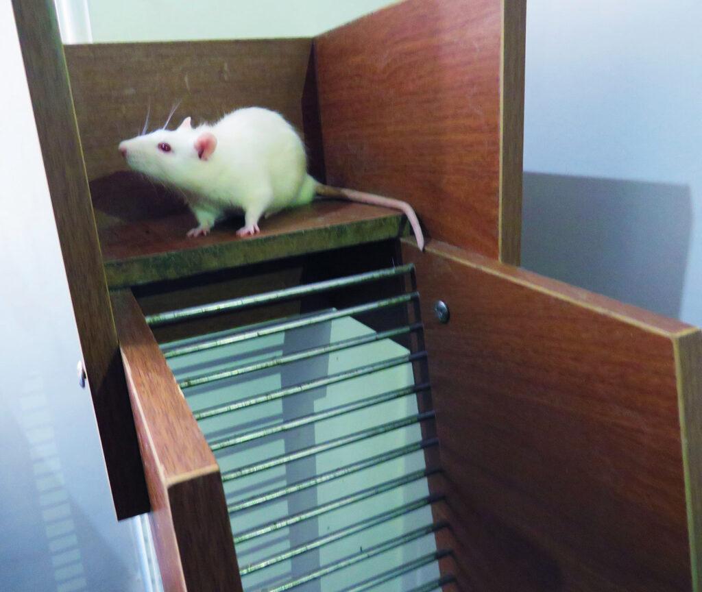 مطالعات حیوانی موش رت موریس واترمیز شاتل باکس اپن فیلد گارسیا ناول آبجکت Elevated body