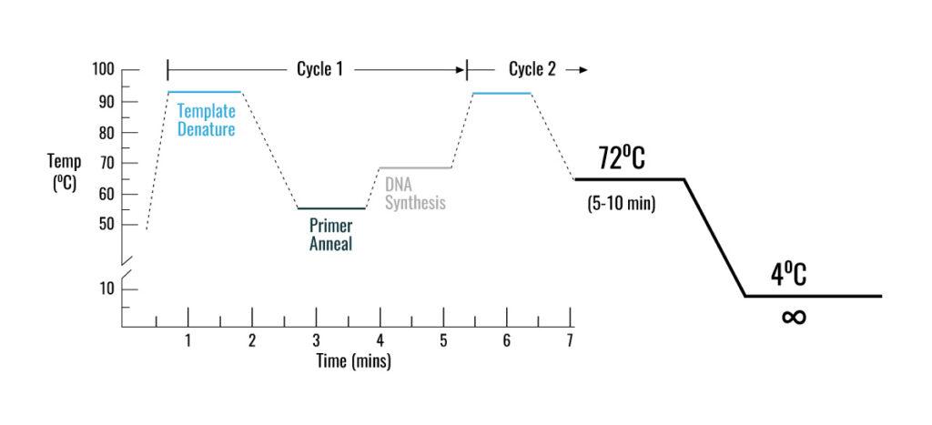 واکنش زنجیره ای پلیمراز PCR - انواع PCR - کاربرد pcr - PCR چیست