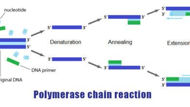 واکنش زنجیره ای پلیمراز PCR