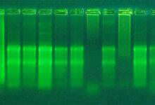 عیب یابی استخراج RNA