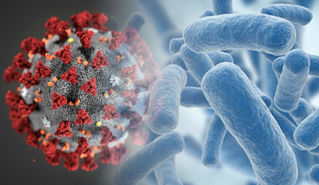 تاثير پروبیوتیک ها بر COVID-19