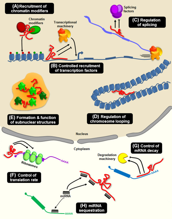 RNA های غیر کد کننده