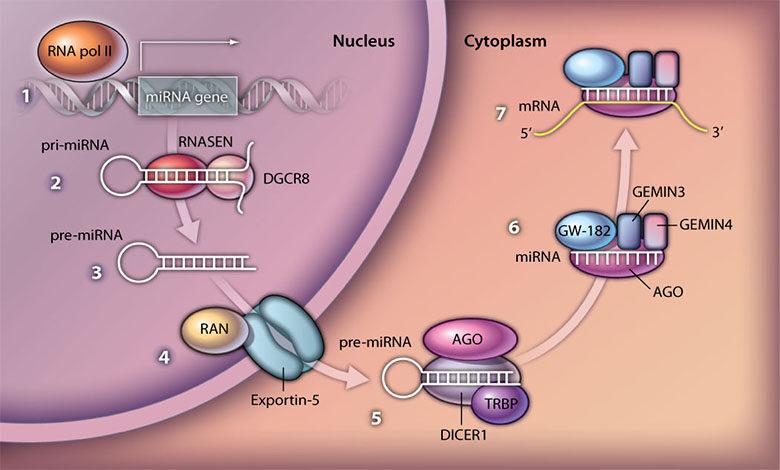 میکرو RNA ها و سرطان