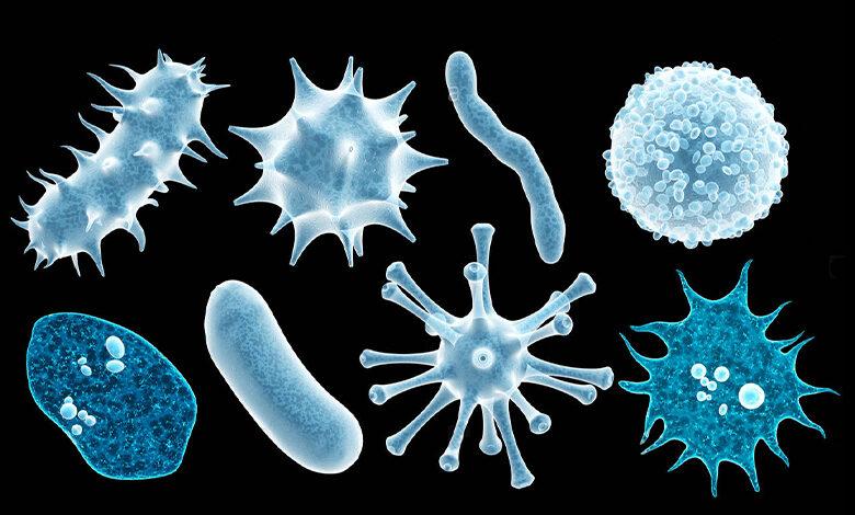 جداسازی و کشت میکروارگانیسم ها