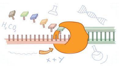 واکنش زنجیره ای پلیمراز (PCR)