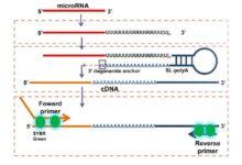 طراحي پرايمر miRNA